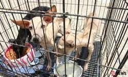 บุกบ้านดาบตำรวจขังหมาแมวกว่า 30 ตัว ผงะ กินกันเอง