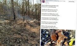 แชร์ภาพหลังไฟป่าดอยสุเทพ ซากสัตว์ป่าเสียชีวิตเกลื่อน