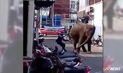 คลิประทึก! ช้างสุรินทร์หงุดหงิด ฟึดฟัดเหวี่ยงอยู่กลางเมือง