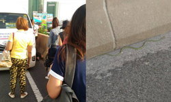 ผู้โดยสารกรี๊ด! เจองูเขียวบนรถตู้รังสิต ต้องจอดไล่กลางทางด่วน