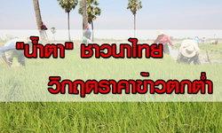 ทางเลือก ทางรอด วิกฤตราคาข้าว ชาวนาไทย