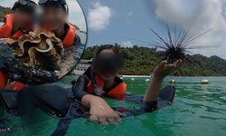แชร์ว่อน! นักท่องเที่ยวจีนนำหอยมือเสือ-หอยเม่น มาถ่ายรูป
