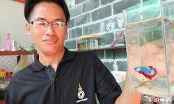 เปิดใจหนุ่มเลี้ยงปลากัดลายธงชาติไทย ทำเงินตัวละครึ่งแสน