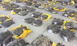 ศุลกากรจีนจับกุมผู้ต้องสงสัยลักลอบหายาก 4 ราย ตรวจยึดชิ้นส่วนสัตว์น้ำหายากจำนวนมาก