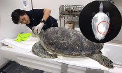 สัตวแพทย์หญิง วอนอย่าโยนเหรียญลงบ่อเลี้ยงสัตว์น้ำ หลังพบเต่ากินเหรียญจนป่วยหนัก