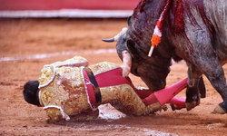 มาทาดอร์หนุ่มรอดตายหวุดหวิด หลังถูกวัวกระทิงใช้เขาแทงทวารหนัก