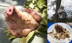 เปิบพิสดาร! หมูเน่าลอยฟ้า อาหารบ้านป่าสุดฮิตชาวบ้านนาคูหา จ.แพร่