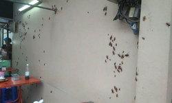 ประสบการณ์สยอง กองทัพแมลงสาบบุกร้านก๋วยเตี๋ยว
