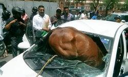 ภาพช็อก! ม้าอินเดียคลั่งอากาศร้อน วิ่งชนเก๋งทะลุกระจก