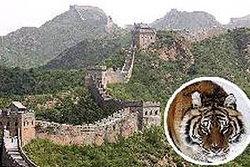 นักท่องเที่ยวโดดลงกำแพงเมืองจีนเจอเสือขย้ำดับ!