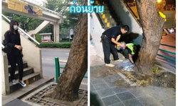 กทม.แจงดราม่าย้ายต้นไม้ขวางสะพานลอย ยันไม่ได้ตัดทิ้ง