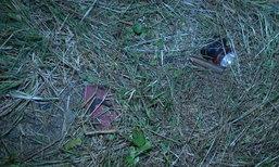 เคียวเชือดคอหญิงวัย 45 ตายเปลือยในพงหญ้า คาดปมคบซ้อน
