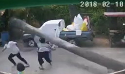 นาทีเฉียดตาย ต้นตาลโค่นใส่เด็ก 2 ขวบ รถกระบะช่วยชีวิต
