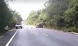 ช้างป่าเขาอ่างฤาไน วิ่งไล่กันกลางป่า รถกระบะเฉี่ยวชนเจ็บ