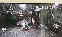 หนุ่มฆ่าแมวสุดโหด ชาวบ้านแฉ เห็นคาตาจับฟาดพื้น ชี้ ปมฉุนฉี่ใส่รถ