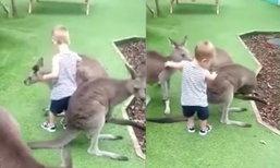 แม่แทบช็อก ลูกน้อยวัย 2 ขวบ ถูกจิงโจ้ในสวนสัตว์จู่โจม