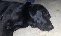 สุดสงสาร แม่หมาวัดตรอมใจนอนน้ำตาไหล คนใจร้ายขโมยลูก 3 ตัว