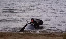 ชาวเน็ตแห่ชื่นชม ตำรวจลุยเดี่ยวช่วยโลมาเกยตื้นริมหาด