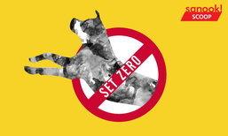 """""""Set Zero"""" กวาดล้างหมาจรจัด ดราม่าร้อนใหม่รับกระแสพิษสุนัขบ้า"""