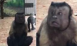 ชาวโลกขนลุก ลิงสวนสัตว์เมืองจีน ตกใจได้สีหน้าคล้ายคนมาก