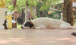 เจ้าอาวาสเซ็ง หมาวัดทยอยตายกว่า 40 ตัว แจ้งหน่วยงานแล้วแต่เงียบ