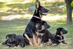 สหรัฐเปิดตัวสุนัขโคลนนิ่งจากสุนัขกู้ภัยในเหตุวินาศกรรม 9/11