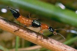 เตือนนิสิต-นศ.รับน้องระวัง แมลงเฟรชชี่ โดนเข้าอันตราย