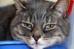 ตะลึง! แมวติดหวัด 2009