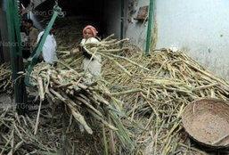 อินเดียคาดน้ำตาลแพงสุดรอบ 29 ปี