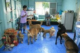 ตะลึง สุนัข รวมใจกันเห่าหอนร้องเพลงชาติทุกเช้า เย็นประจำ เจ้าของแนะนักการเมืองดูเป็นตัวอย่าง