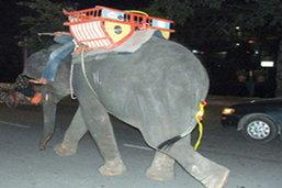 กทม.ไล่จับช้างคืนนี้