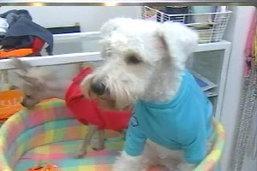 สัตวแพทย์ห่วงวัดเป็นพื้นที่เสี่ยงระบาดโรคพิษสุนัขบ้า