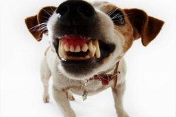 กทม.ตั้งเป้า 6 ปี โรคพิษสุนัขบ้าจะหมด กทม.
