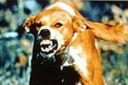 สธ.ตั้งเป้ากำจัดโรคพิษสุนัขบ้าให้หมดใน 10 ปี