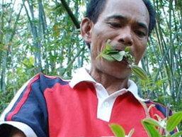 ชายจีนกินหญ้าและใบไม้แทนข้าวนาน 2 ปี แต่ยังคงแข็งแรง