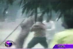เสืออินเดียหลง ทำร้ายชาวบ้านเจ็บ 7 ราย
