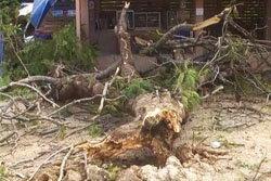 ต้นจามจุรี 50 ปี ล้มใส่โรงพักลำปาง-ไร้เจ็บ