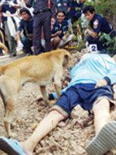 ลวงฆ่าโหดเศรษฐินี หมาเฝ้าศพ เลียเท้า-ปลุกให้ตื่น