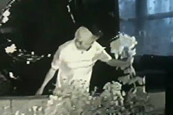 คลิปประจาน! หนุ่มเวลส์แอบเด็ดดอกไม้บ้านคนอื่น