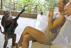 สื่อนอกแฉ คณะแสดงลิงไทย ทรมานสัตว์