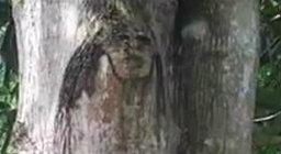 ต้นมะม่วงหน้าคน ชาวบ้านแห่ขอหวยเลขเด็ด