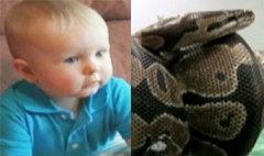 ระทึก! เด็ก1ขวบ หวิดถูกงูหลามกิน ขณะหลับอยู่ในเปล