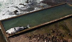 ชาวออสซี่ตะลึง! วาฬยักษ์30ตัน เกยตื้นตายขึ้นอืดริมทะเล