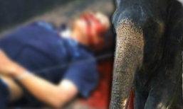 ควาญช้างดวงกุด อาบน้ำช้างโดนล้มทับดับอนาถ
