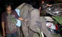 ร้อนจัด ช้างตกมันเหวี่ยงร่างเด็กกระแทกกระจกรถแตก!