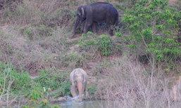 กรมอุทยานฯ รับมีข่าวตั้งค่าตัวช้างเผือก 6 ล้าน