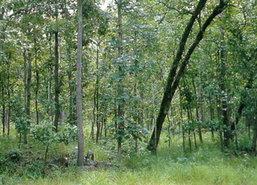 กรมป่าไม้ชี้ประกาศขายที่ดินป่าเพชรบูรณ์หลอกลวง