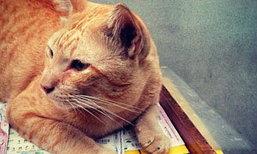 แมวอโศก แมวเซเลปที่ดังที่สุด ตอนนี้!!!