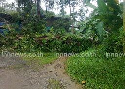 ระนองฝนตกหนักต้นไม้ใหญ่ล้มทับบ้านเรือน
