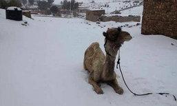 อากาศวิปริต! หิมะตกครั้งแรกที่อิยิปต์ ในรอบ 112 ปี